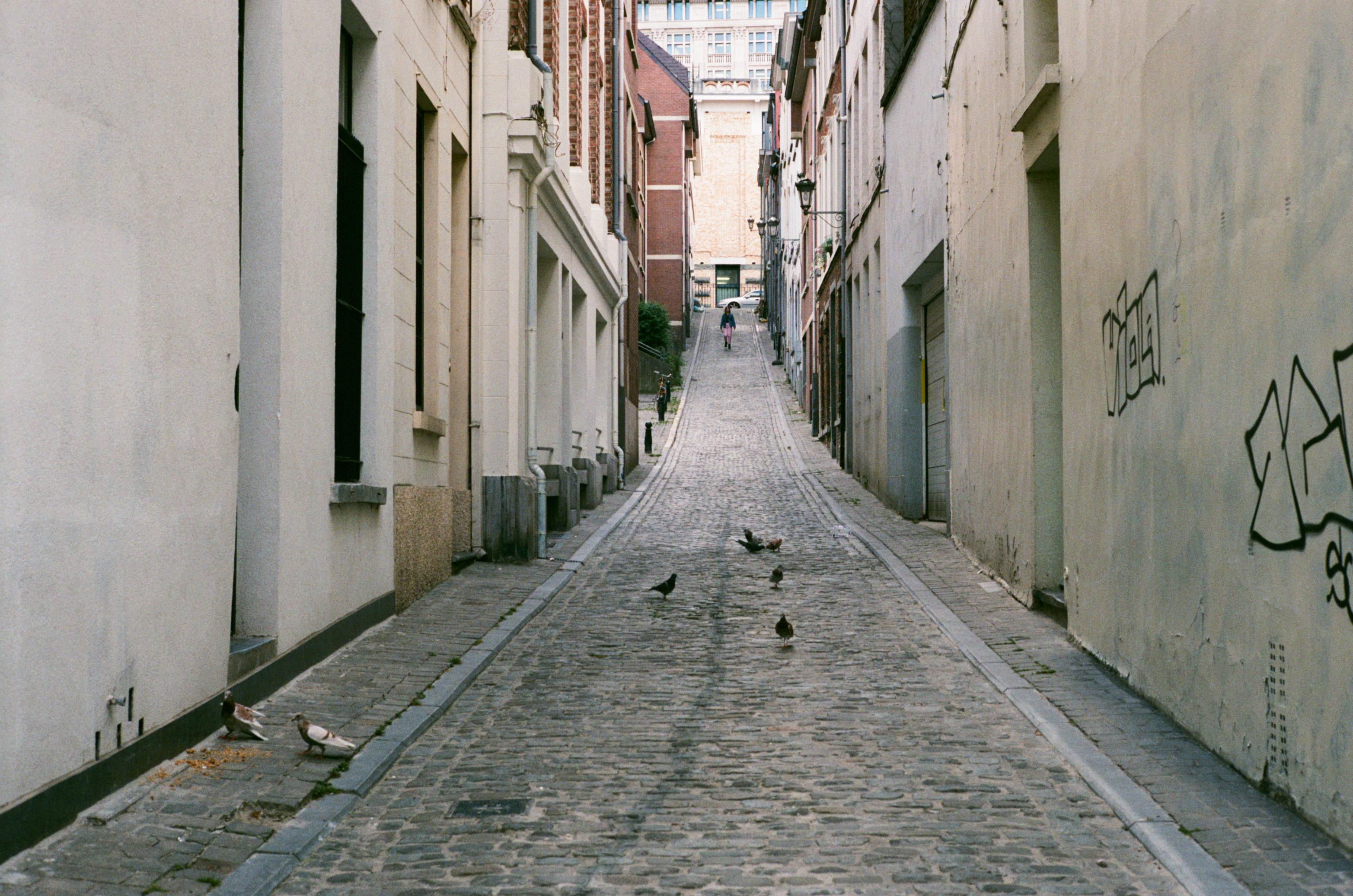 Birds struggle but adapt to a city life